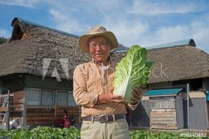野菜農園を開こう